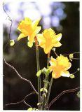 Genesungskarte - Gelbe Blumen