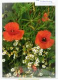 Geburtstagskarte - Blumenmeer