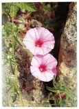 Diamanthochzeitskarte - Roséfarbene Blumen