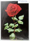 Geburtstagskarte - Rote Rose