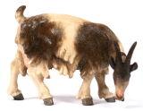 Kostner-Krippe - Ziege äsend rechtssschauend